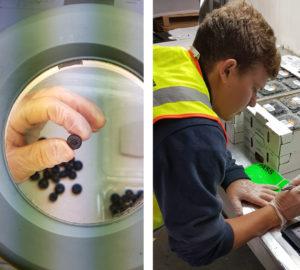 Blueberry IVA Inspection
